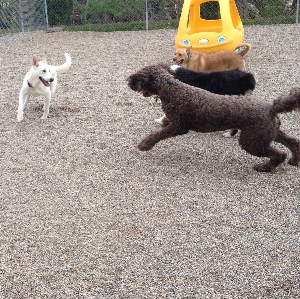 Tucker, Minnie, and Sampson leap towards Leif!