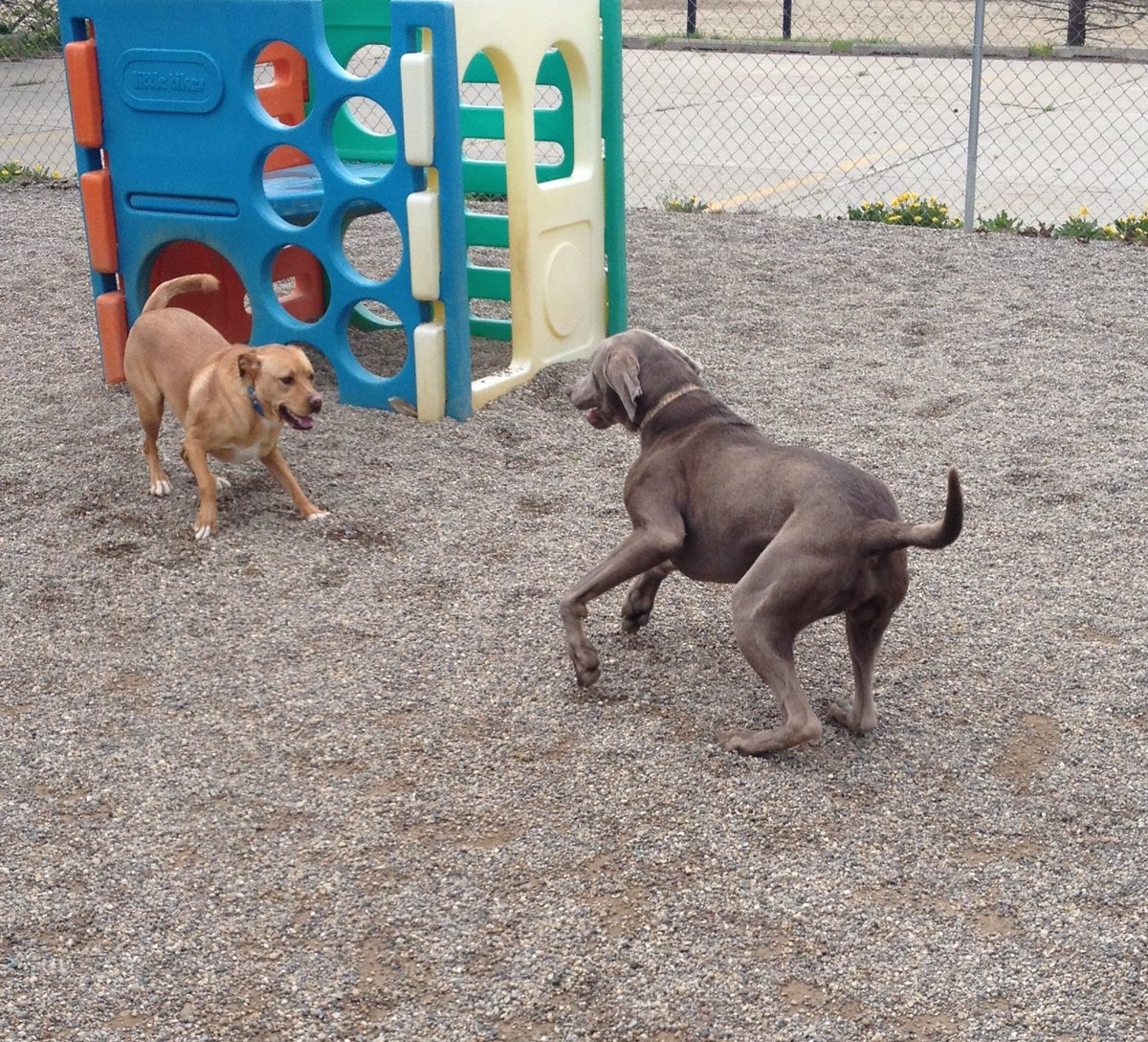 Sampson asks Stitch to play!