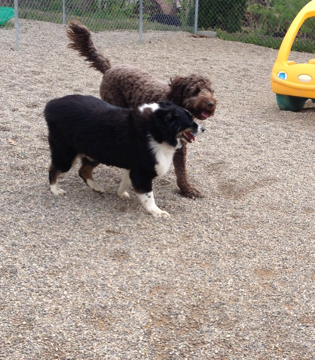 Minnie and Tucker walk side by side!