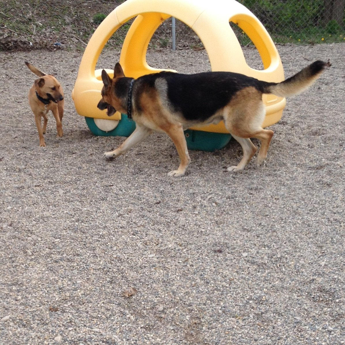 Chip tries to sneak up on Dega!
