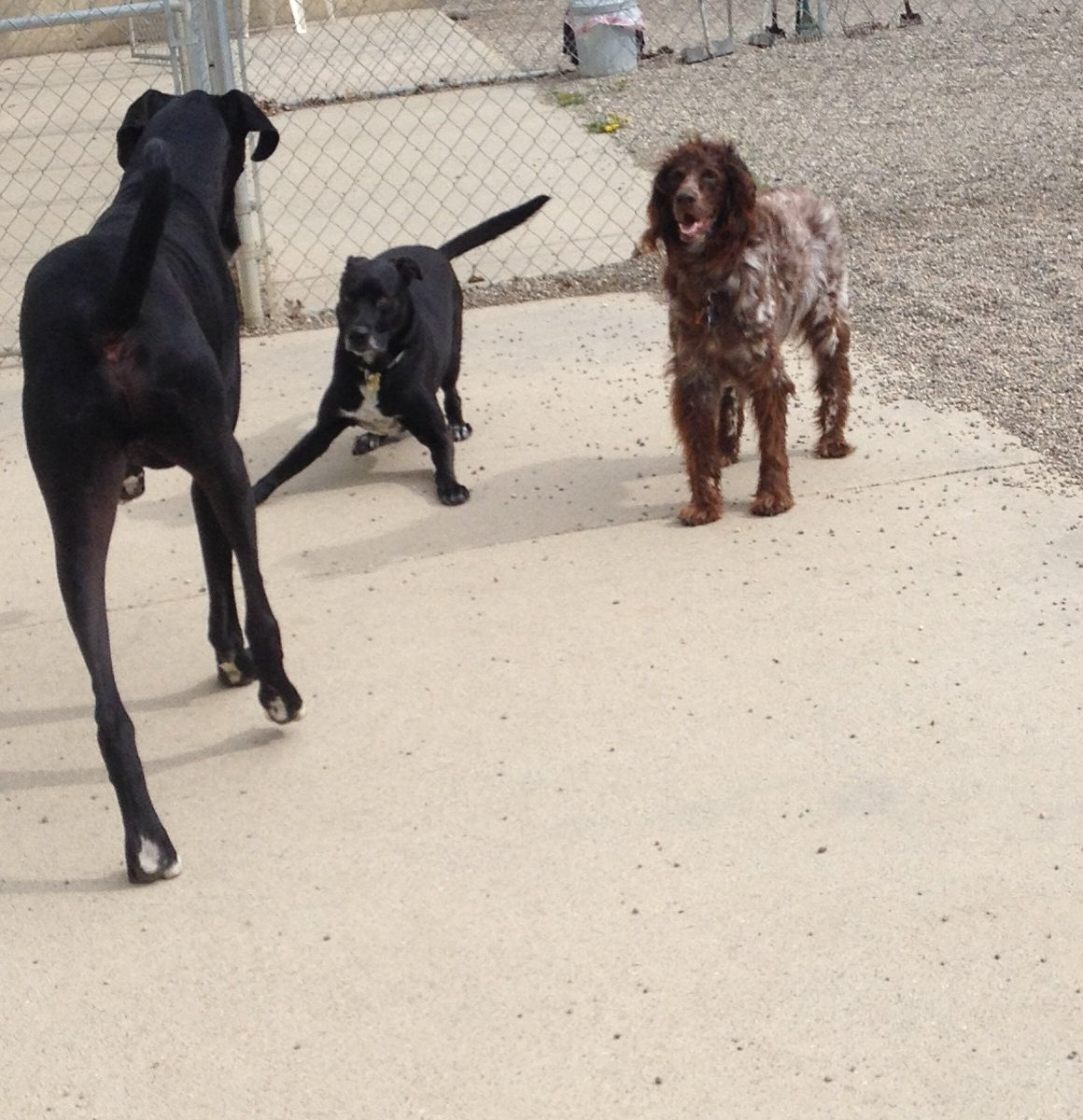 Zoey and Nelly ask Zeus to play!
