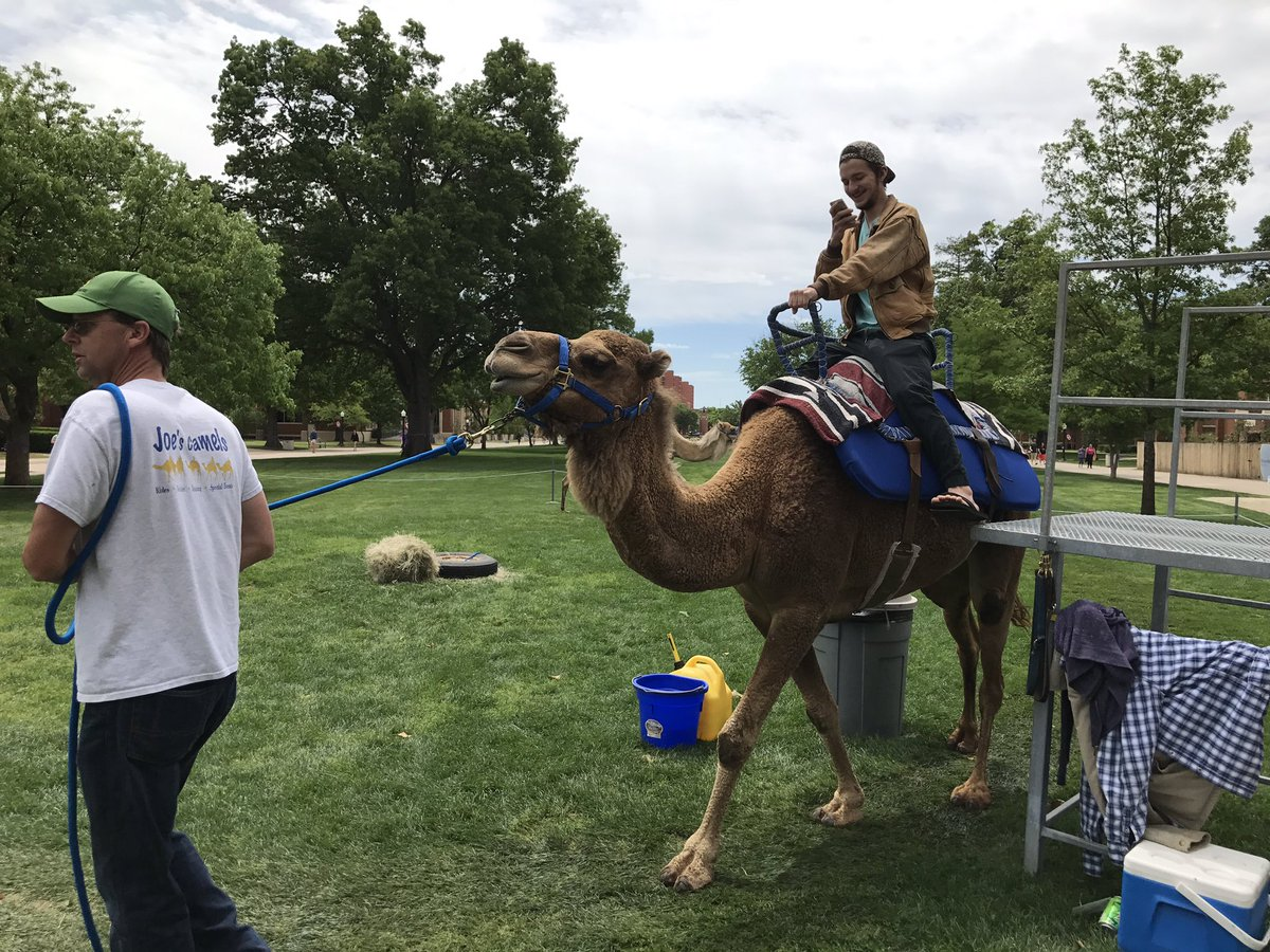 Missed opportunity by not having camels on Wednesday.