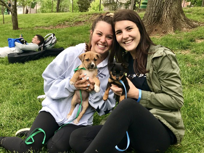 IU students + puppies = smiles