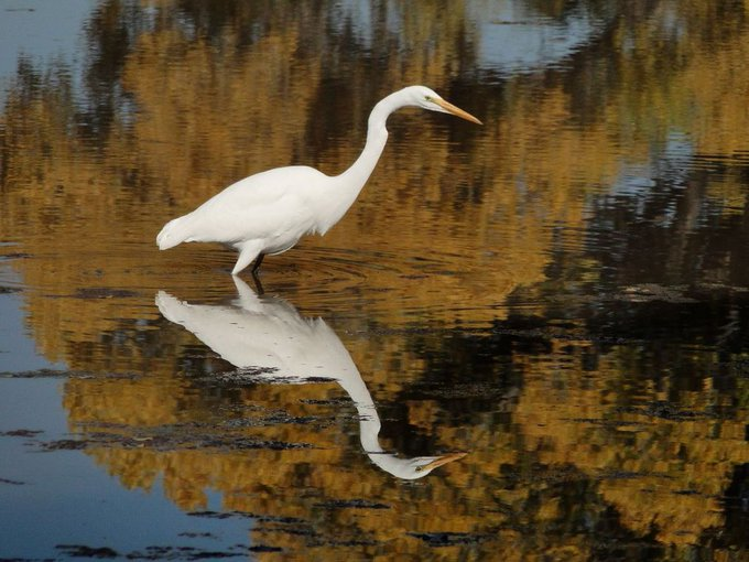 Tucson Outdoor Birding and more...May 4-12 https://t.co/SaGg2AGIaE