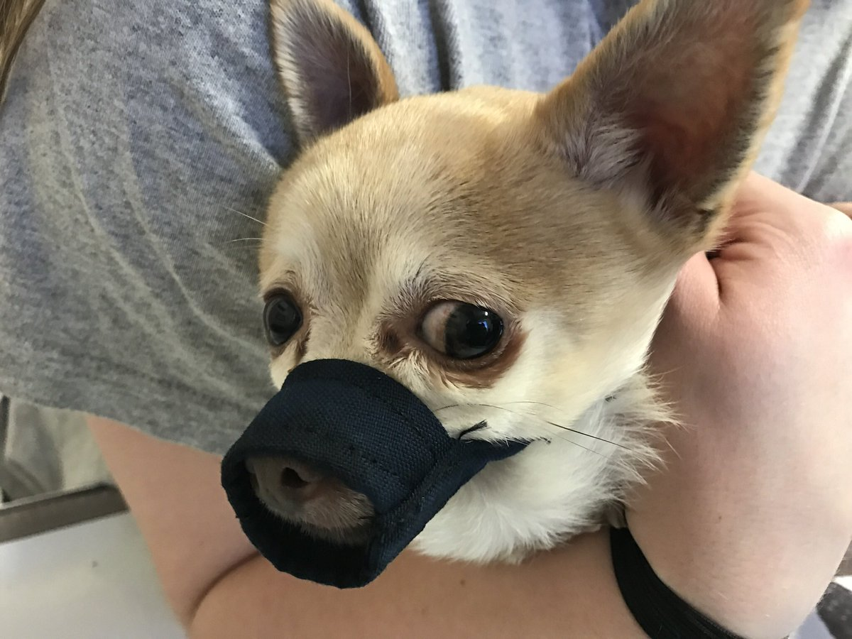 Basket Muzzle For Chihuahua
