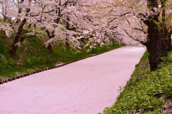 今がまさに見ごろ!  春の絶景!桜の絨毯が圧巻の【弘前さくらまつり】と自然を楽しむ温泉宿 https://t.co/klQHyT5goP  お濠が桜の花びらで埋め尽くされる絶景、一度は見てみたいですね https://t.co/8KVqUYoeLn