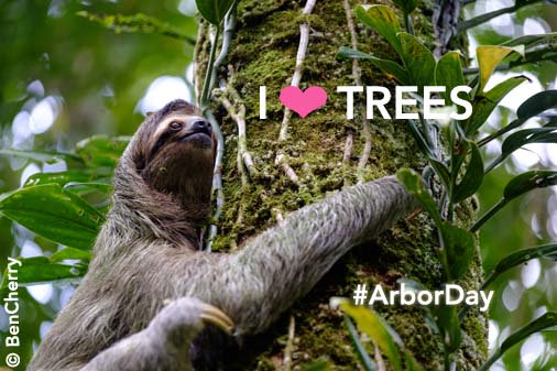 Do you love trees as much as this guy? RT to show your