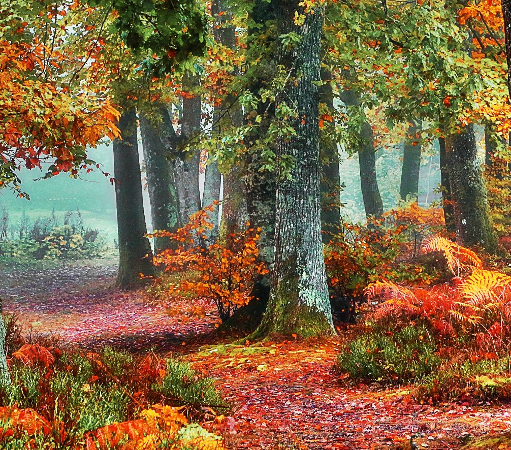 Amazing #Forests on #Earth <br>http://pic.twitter.com/TYP4FYQBzW
