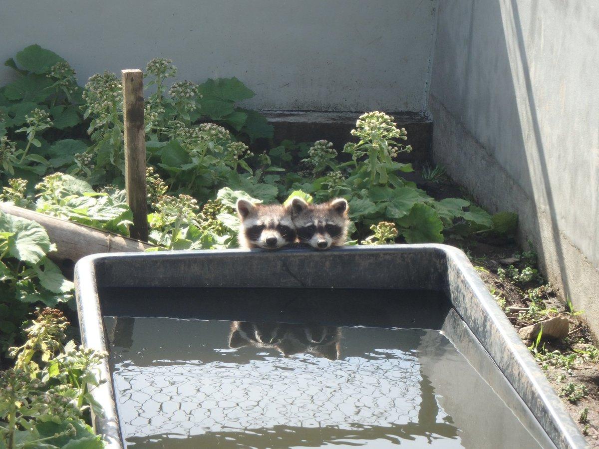知り合いの動物園のおにいさんの撮った写真可愛すぎるんだが!!!!! pic.twitter.com/6JOPkAUdFw