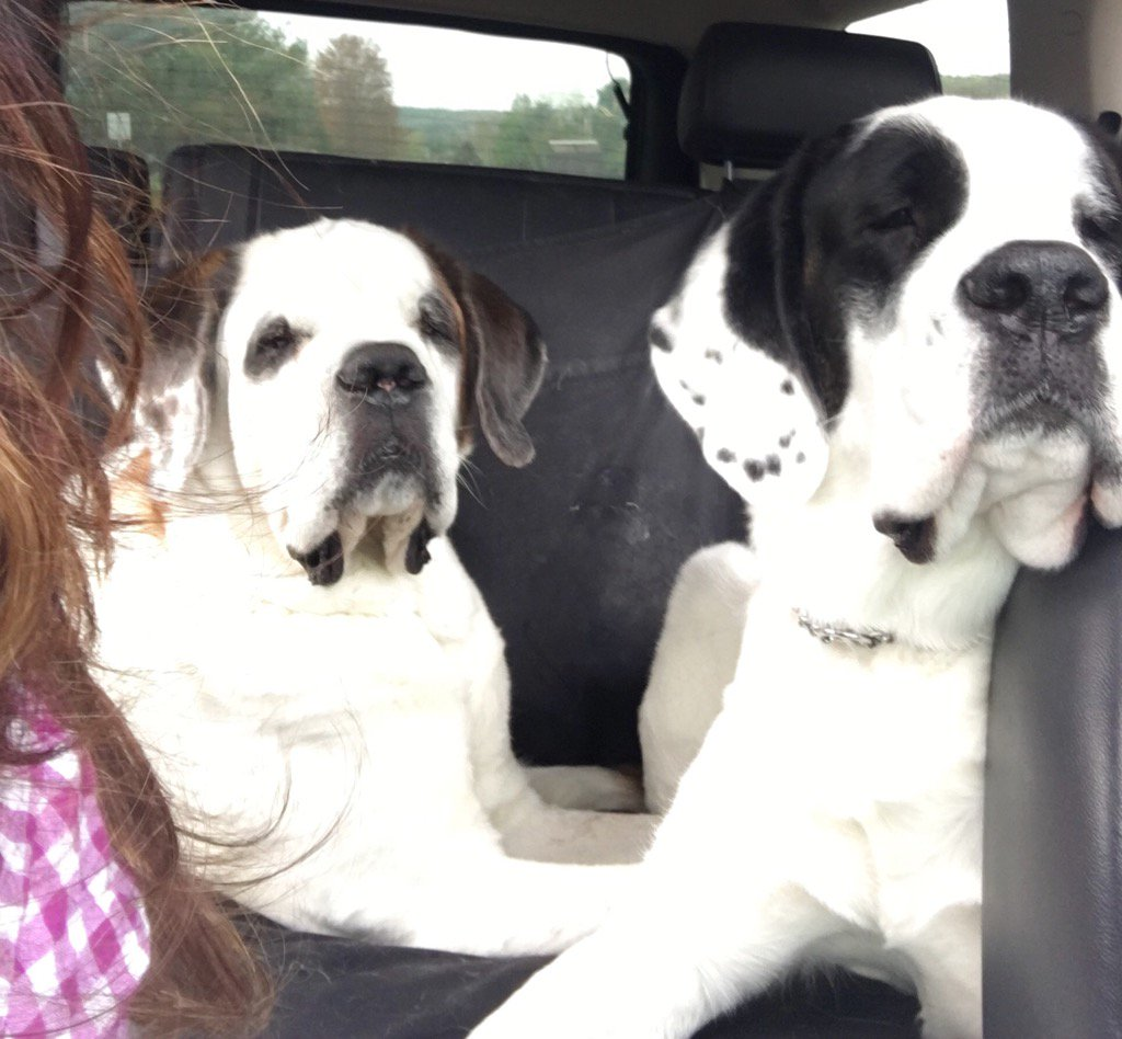 Road trip to Vermont, here we come! @dogcelebration #dogsoftwitter <br>http://pic.twitter.com/1o1Esx6SLW
