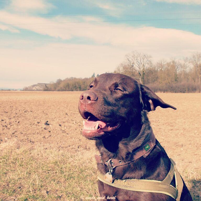 I like it windy!   #dogsoftwitter <br>http://pic.twitter.com/P257nAKeHN