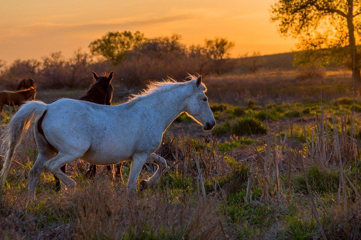 Конь в степи картинки