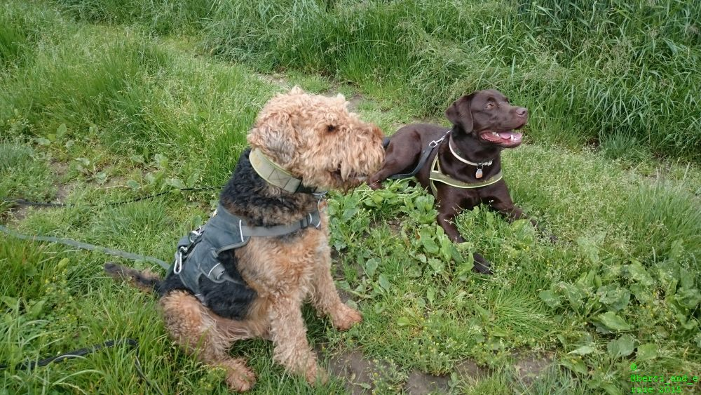 A smiling hello from Ernie and Berti to cheer you up!  #dogs #joy<br>http://pic.twitter.com/l7epXEIUlh