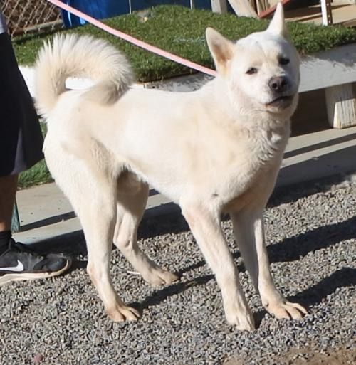 Izo&#39;s got loads of enthusiasm if you&#39;ve got the energy. Meet him at #AkitaRanch email apassionforpaws@gmail.com for adoption info #dogs <br>http://pic.twitter.com/xvkoqAcio2