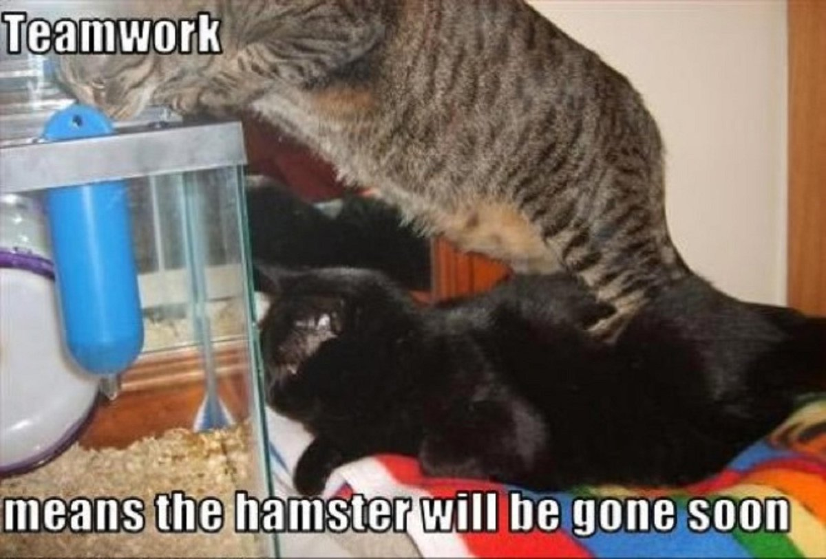 Hamster in trouble!  #cute #adorable #kitty #cats #pets <br>http://pic.twitter.com/2VxtOcpaZQ