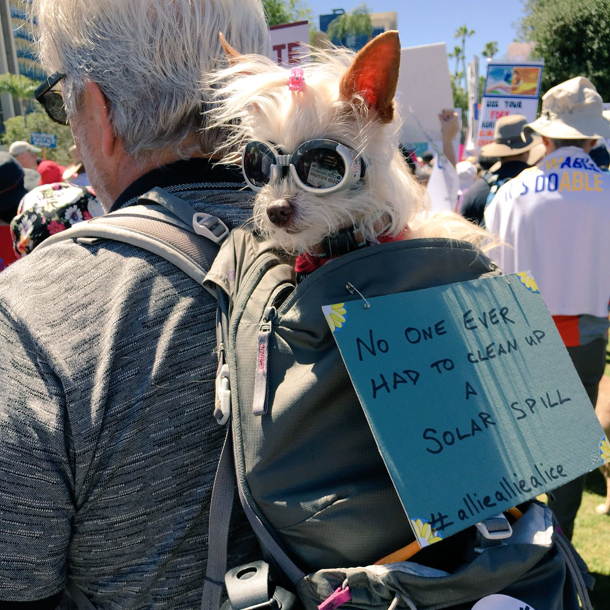 Canines for #ClimateAction! #ActOnClimate!  #ClimateMarchSD #dogsoftwitter <br>http://pic.twitter.com/zQCRy9kn41