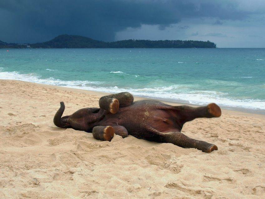 海にきた子供の象が喜びを隠せなくて顔面から海に突っ込む姿が可愛い(笑)テンションが上がりすぎ