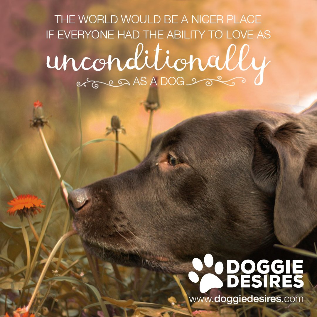 Dogs love unconditionally &lt;3  http://www. doggiedesires.com  &nbsp;   #dog #dogs #doglove #dogowner #doglover #doggielove #mydog<br>http://pic.twitter.com/sFQMZ1n7Nb