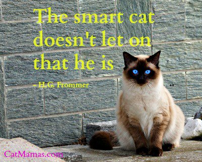 No-one can tell me #cats aren&#39;t smart! Which one of us goes to work, and which one sleeps all day...? #pets <br>http://pic.twitter.com/LQLkkGpCuw