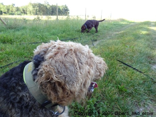Berti loves to watch Ernie playing around.  #dogslife #dogs <br>http://pic.twitter.com/PIOU5glVxU