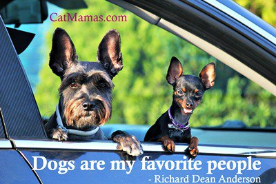 A shout-out to all those #dog people out there - #cats are not the only 4 legged friends we adore! #pets <br>http://pic.twitter.com/muOAWuKaLz