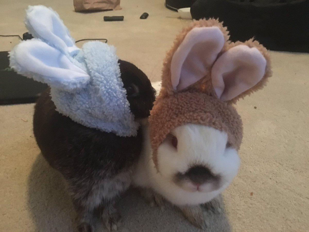 Emiru Twitch  - bunnies with twitter @Emiru