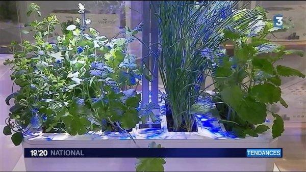 Tendance : les Français citadins à l'ère du végétal https://t.co/KJmsmoijtd #Environnement #Paris
