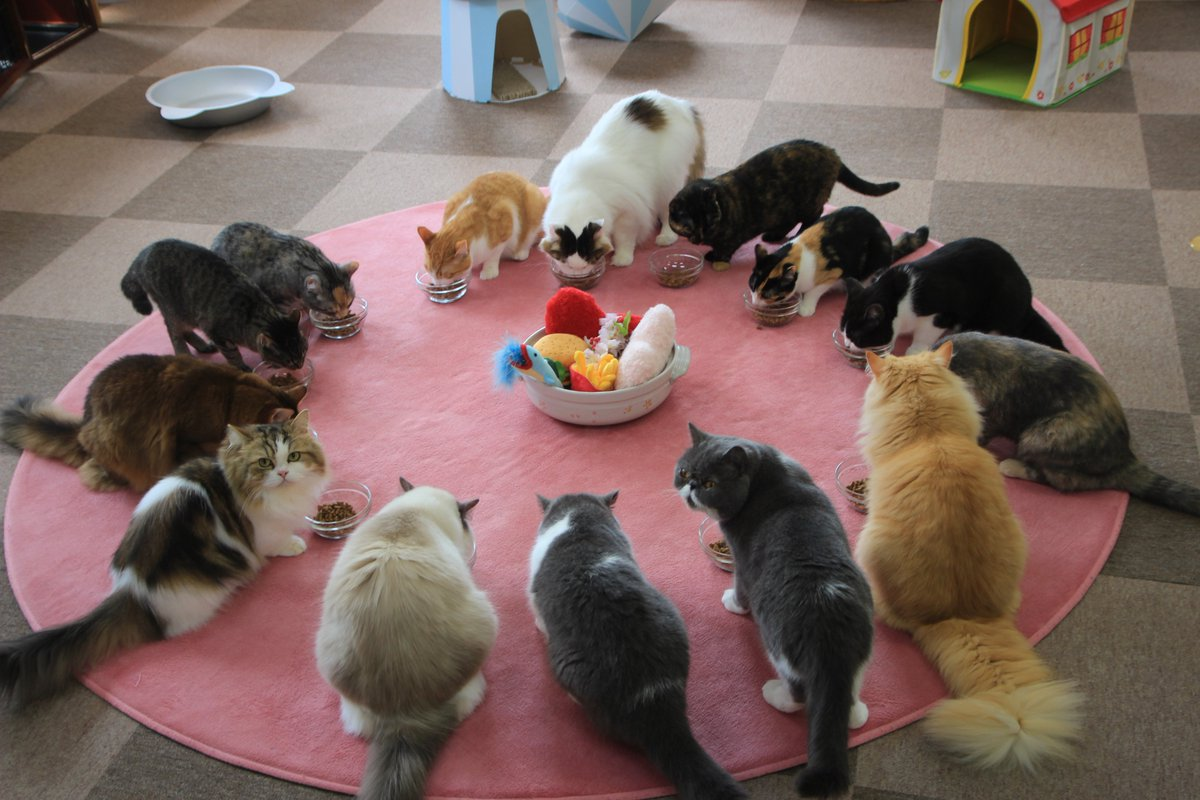 The 5 Best CAT CAFES in Tokyo | favy