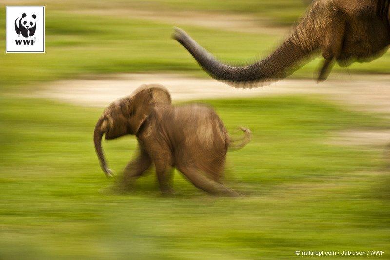 【#WWF今日の一枚】 https://t.co/8wdktkfhKz