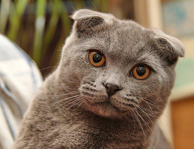невероятно порода кошек без ушей фото сми упорно давят