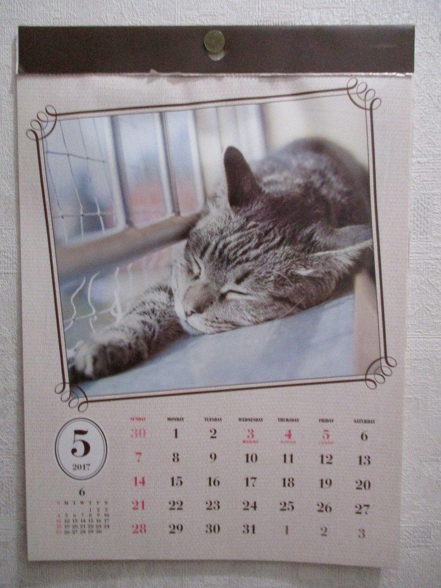 test ツイッターメディア - トイレ貼ってあるダイソーのにゃんこカレンダー、 また今月も寝てます(???)??  いい加減起きようや!(??????)???  #ネコ #猫 #ぬこ #にゃんこ #猫グッズ #ダイソー #カレンダー https://t.co/VttoAJdPQ3
