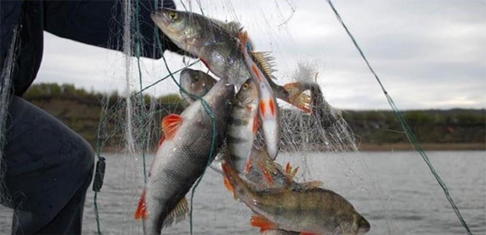 с какого наступает воспрещение для рыбную ловлю