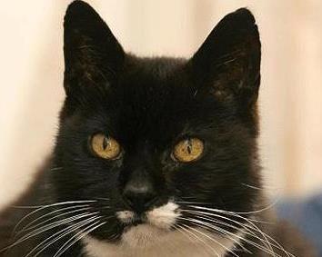 795b33104bc9 Cat Carter ( CarterTheCatDog)