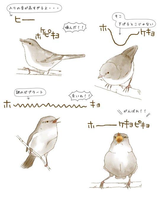 鶯鳴き方研究ノート