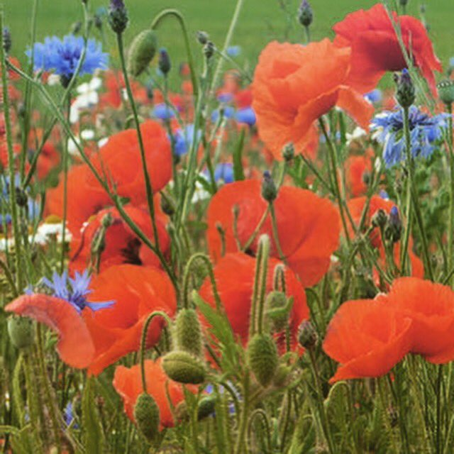 Our #new years wish is to fill every garden with #wildflowers for our #bees and butterflies! Join us!<br>http://pic.twitter.com/Xy34j17GYE