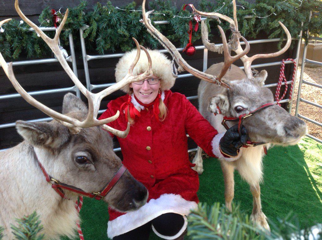 #Christmas reindeer and sleigh visit #loseleypark for yesterday's festive #wedding celebrations @Loseleyevents