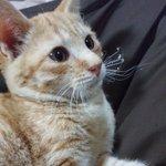 寒い冬…ストーブで暖まった猫のヒゲがくるんくるんになってて可愛すぎる!