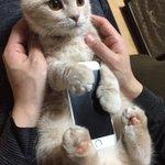 猫がスマホを優しく包み込んでくれるiPhoneケース…めっちゃほしい!