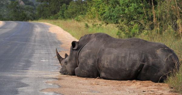 Le guépard, la girafe et le rhinocéros noir risquent de disparaître en Afrique https://t.co/dlkoRKXMlZ