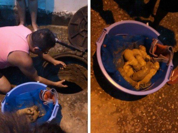 Cadela dá à luz 10 filhotes dentro de bueiro e é resgatada em Jacareí, SP https://t.co/b3hPI28FJ1 #G1