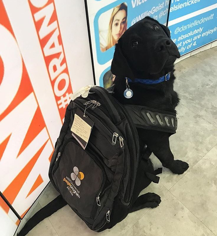 SPOTTED: @TODAYPuppy wearing some familiar #pageAtNBCU swag today at the @TODAYshow 🐶