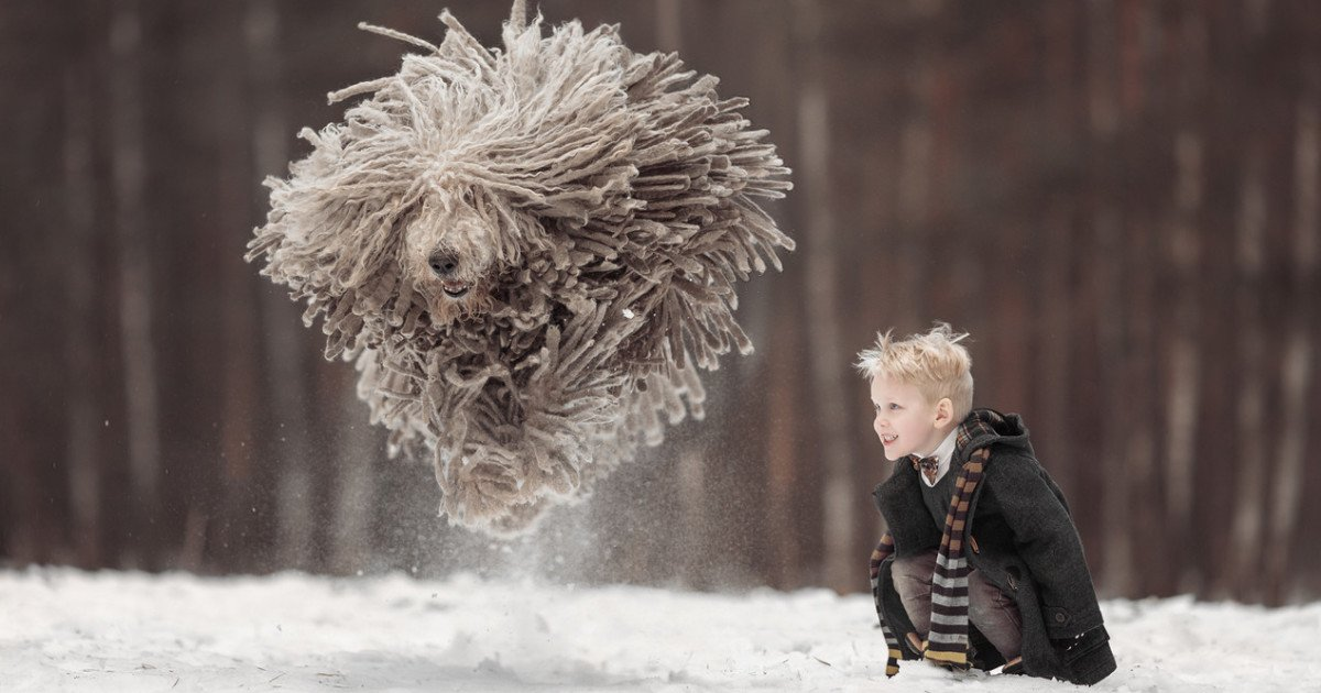This giant 'mop' dog playing with a kid will make your day: https://t.co/YOiVpQfSM7 https://t.co/fCuoKFObwf