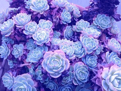Image result for flower aesthetic pictures