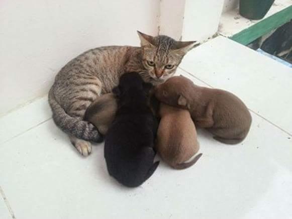 แมว : กูไม่ใช่แม่มึง แม่มึงอยู่โน่น 55555555555555   via.mykrislu https://t.co/aOxHCJFLMe