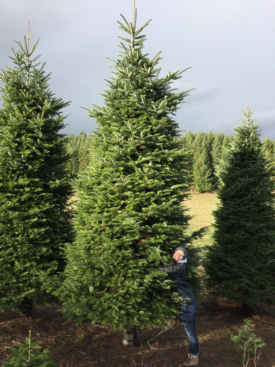 'Through the roof' Christmas trees are the season's most festive prank