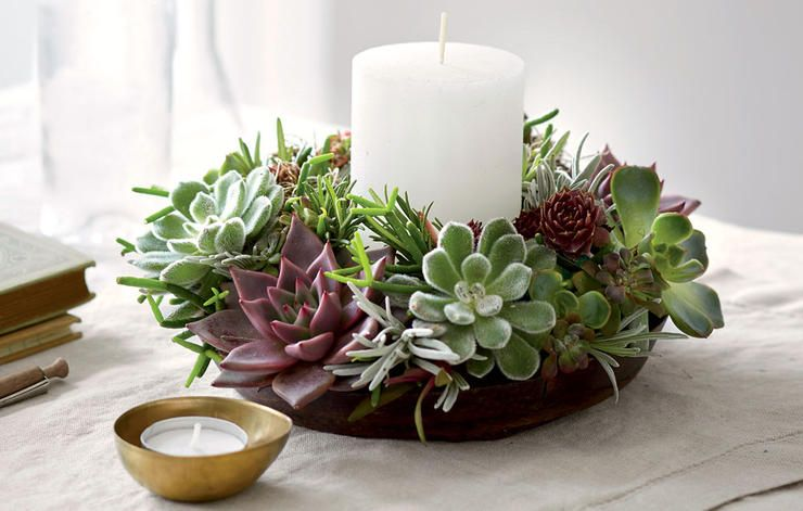 Decorate For The Holidays With Succulents! https://t.co/hBMbykNNeJ https://t.co/XmlE4VukSh