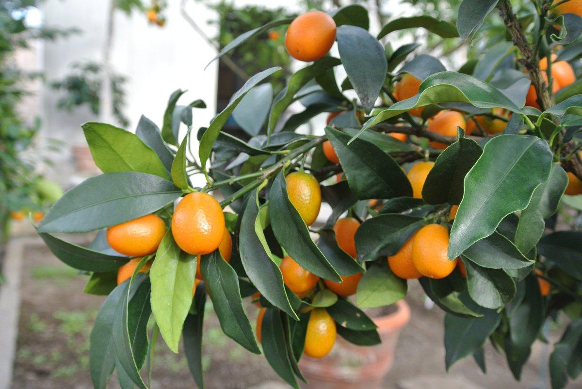wonderful citrus latest news breaking headlines and top