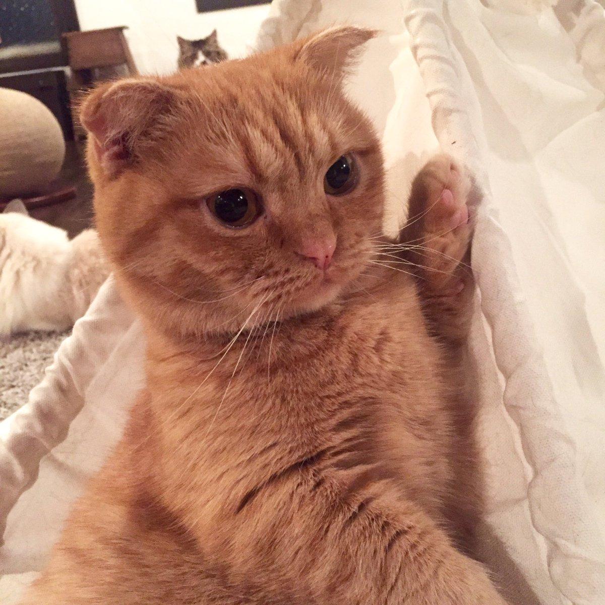 ウニちゃんの挙手が可愛くて写真を撮ったのに、ウニちゃんの頭から生えてるチビペコちゃんが気になってしまう。 pic.twitter.com/haPHU0Rxgy