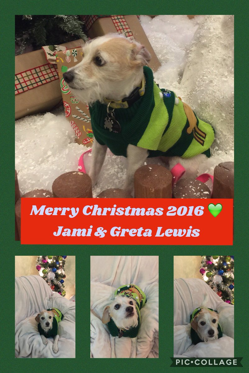 My mommy and I sent Christmas cards. #merrychristmas #jackapoo #dogsoftwitter #dogchristmassweater #dogchristmascard <br>http://pic.twitter.com/x14GS1jTGF