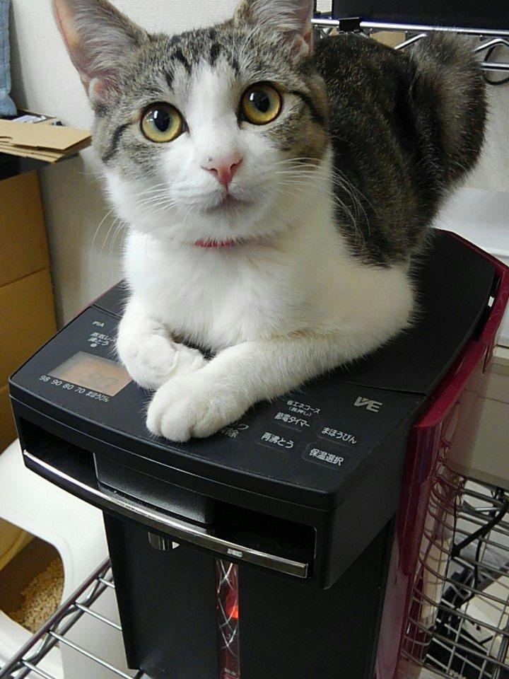 「蒸気の出ないポット」考えた人、絶対、猫飼ってると思う。定期的に再沸騰のボタン押されることまでは予測できなかったみたいだけど。 https://t.co/6LGsBJsH0O